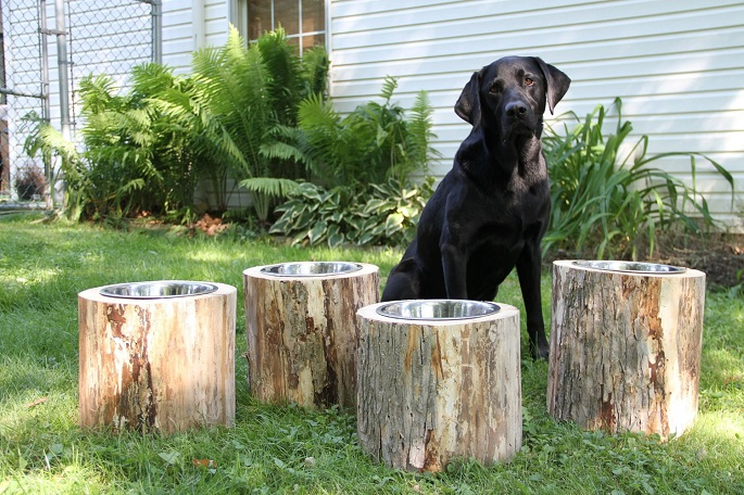 dog with bowls