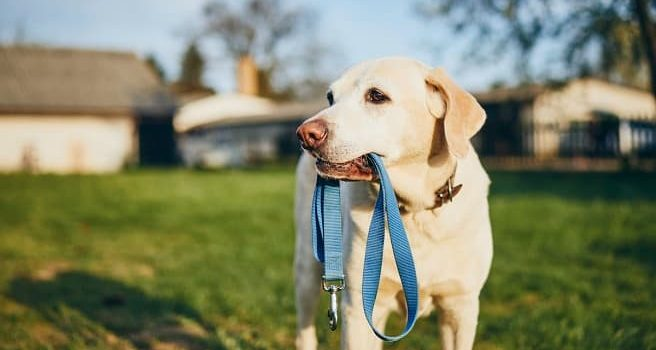 Best-dog-leads