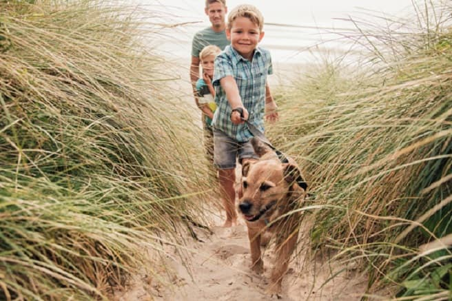 Choose the Right Lead for Your Pooch