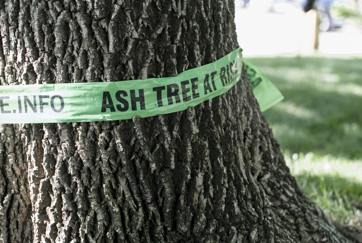 Certified Arborists Are Your Backyard's Best Friend