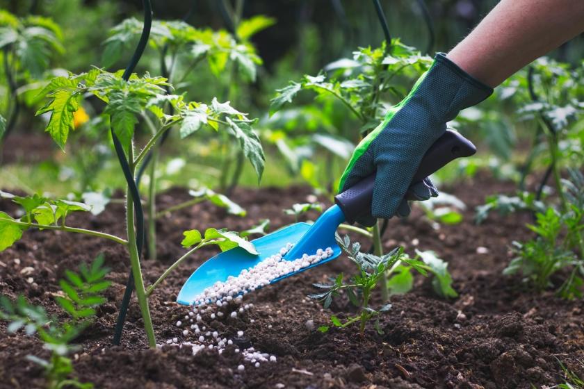 fertilization of the soil