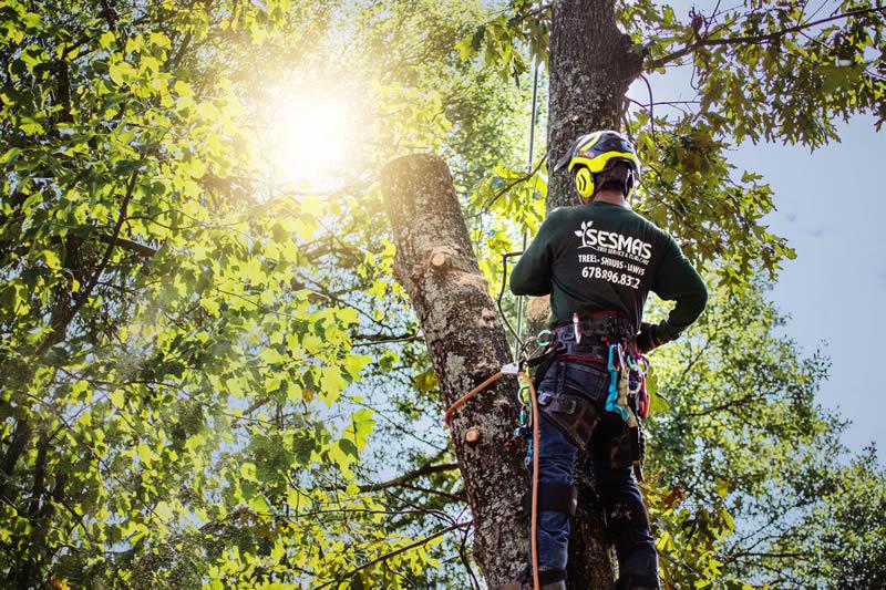man climbed on a tree