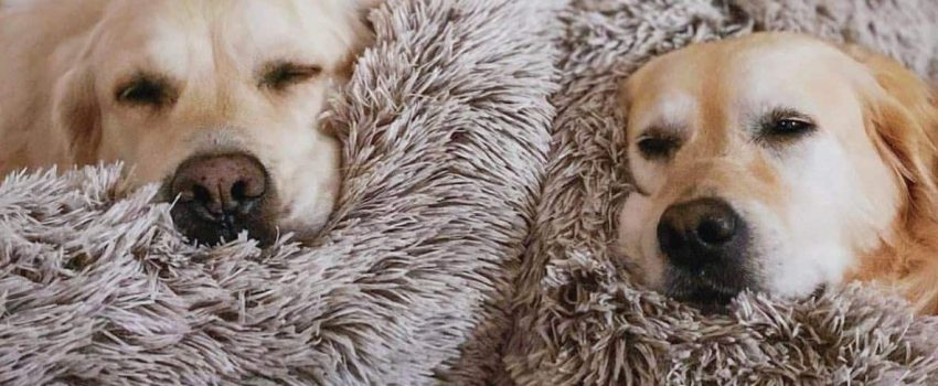 dogs in Dog Snuggle Beds