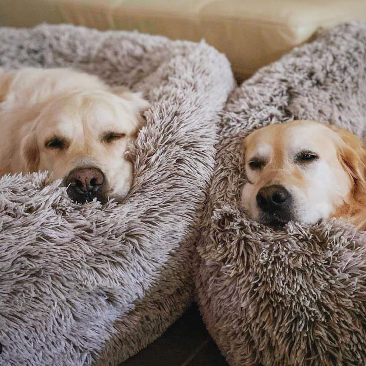 Here's Why Choosing the Right Bed for Your Dog Matters